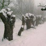Een heerlijke winterwandeling – 8 februari