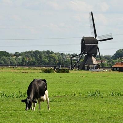 wandelroute-door-de-polder-achter-het-museum-2